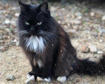 Este gato dio a luz pero no eran gatitos